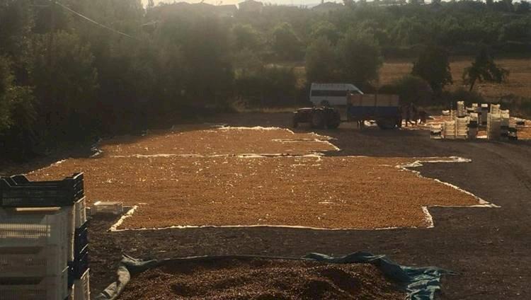 Şanlıurfa'dan Çalışmaya Giden Mevsimlik Tarım İşçileri Yevmiye Az Ama Mecburuz
